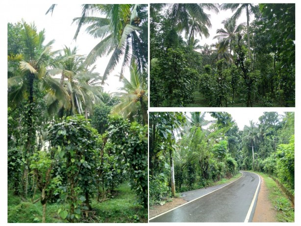 Land For Sale In Matale