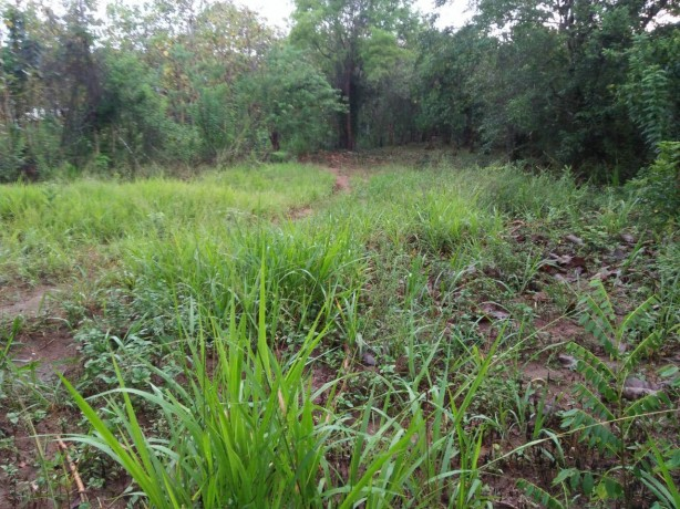 Land for sale in BIBILE
